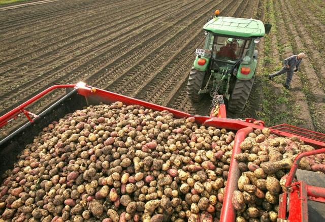 ВоВладимирской области из-за дождей убрано только 70 процентов урожая